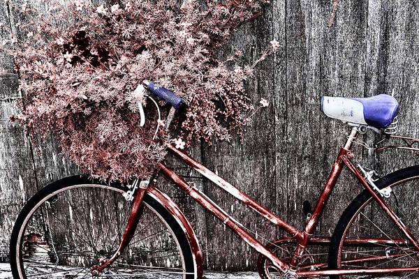 Flowers Bike Wall Art - Photograph - Basket Full by Mark Kiver