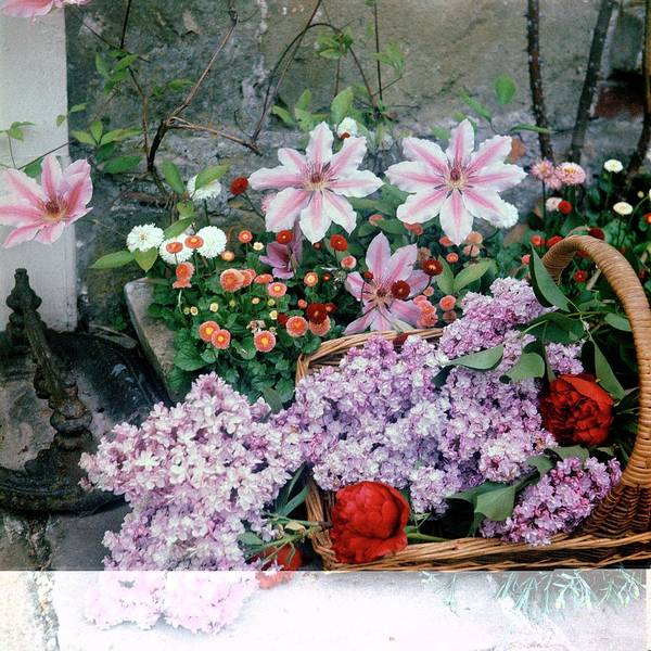Flower Petals Photograph - Basket Of Flowers At Reddish House by Cecil Beaton