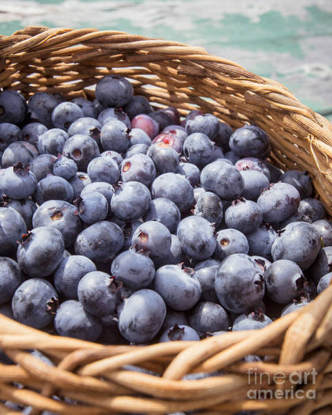 Blue Berry Photograph - Basket Of Fresh Picked Blueberries by Edward Fielding