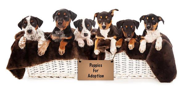 Doberman Photograph - Basket Of Mixed Breed Puppies by Susan Schmitz