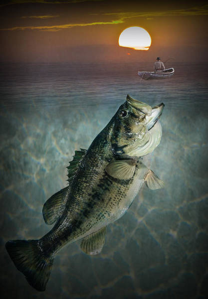 Photograph - Bass Revenge by Randall Nyhof