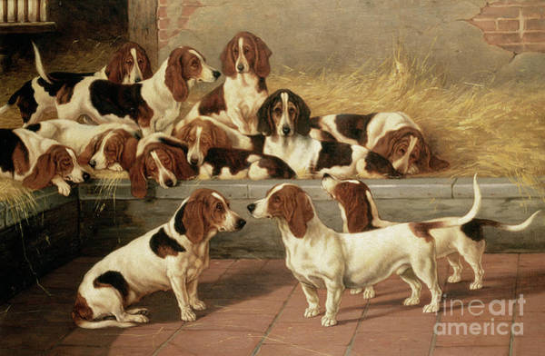 Hunting Dog Wall Art - Painting - Basset Hounds In A Kennel by VT Garland