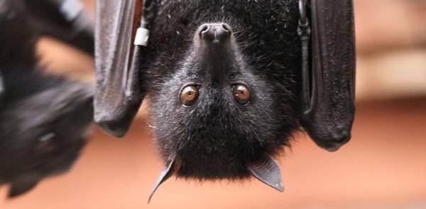 Photograph - Bat Eyes by Dan Sproul