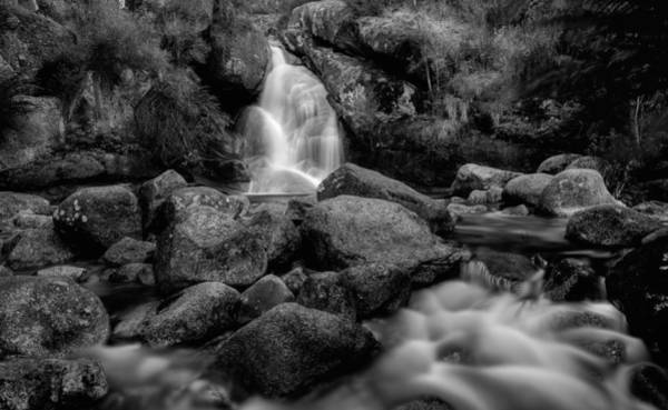 Photograph - Bathed In Black by Mark Lucey