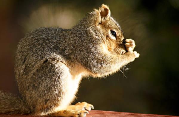 Photograph - Bathing Squirrel by Marilyn Hunt