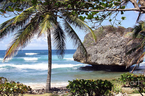 Photograph - Bathsheba No11 by PJ Boylan