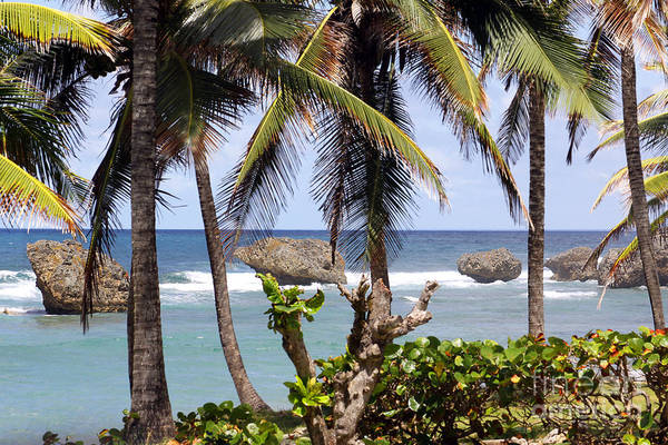 Photograph - Bathsheba No7 by PJ Boylan