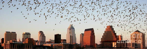 Wall Art - Photograph - Bats Over Austin Panoramic by Randy Smith