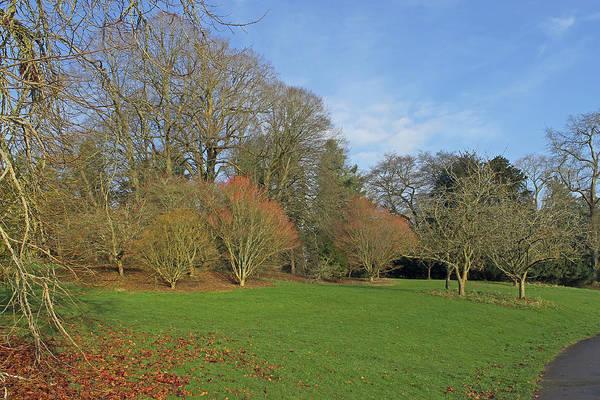 Photograph - Batsford Arboretum by Tony Murtagh