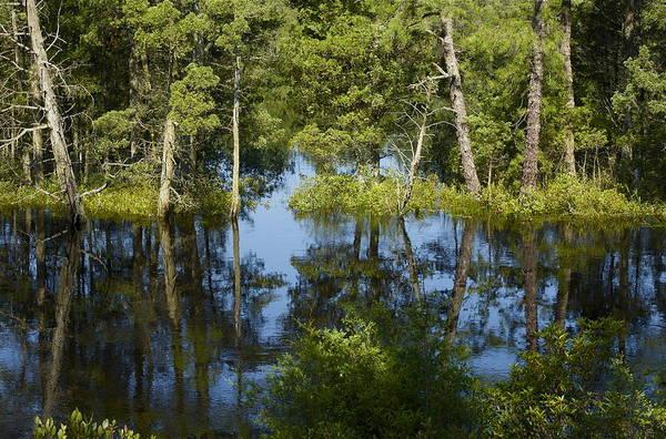 Photograph - Batsto River by Greg Vizzi