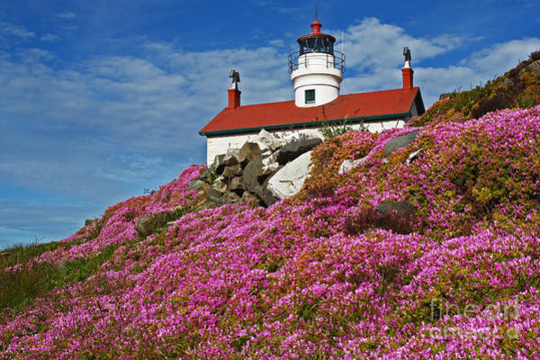 Low Battery Photograph - Battery Point Bloom Seventy Two by Donald Sewell