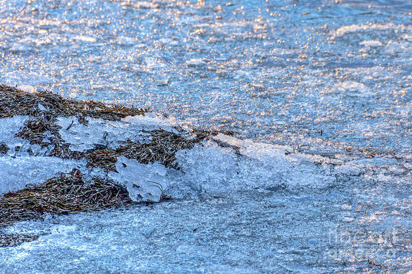 Photograph - Bay Ice by Susan Cole Kelly