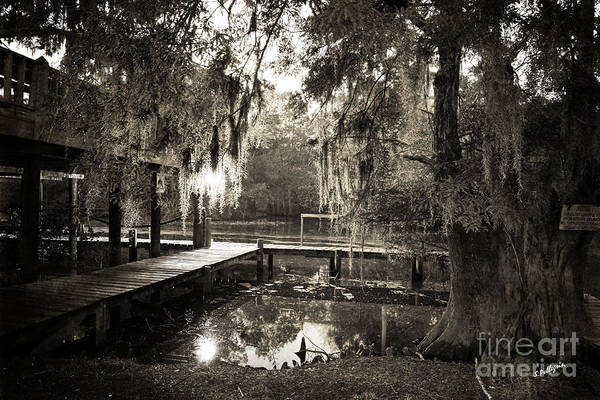 Swamp Photograph - Bayou Evening by Scott Pellegrin