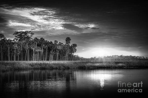 Palmetto Photograph - Bayou Sunset-b/w by Marvin Spates
