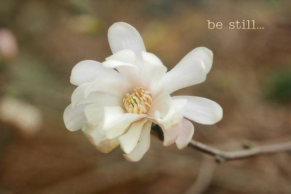 Photograph - Be Still by Trina  Ansel