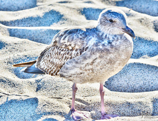 Photograph - Beach Bird by Jody Lane