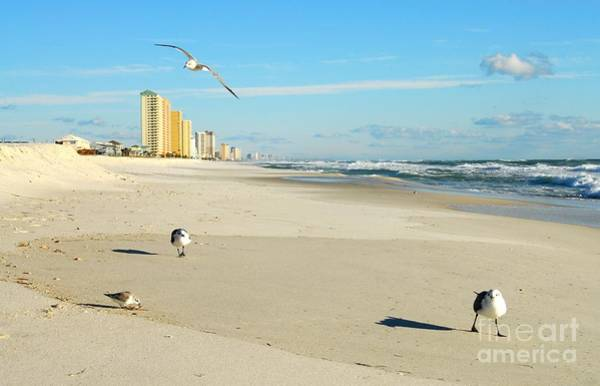Photograph - Beach Birds by Anthony Wilkening