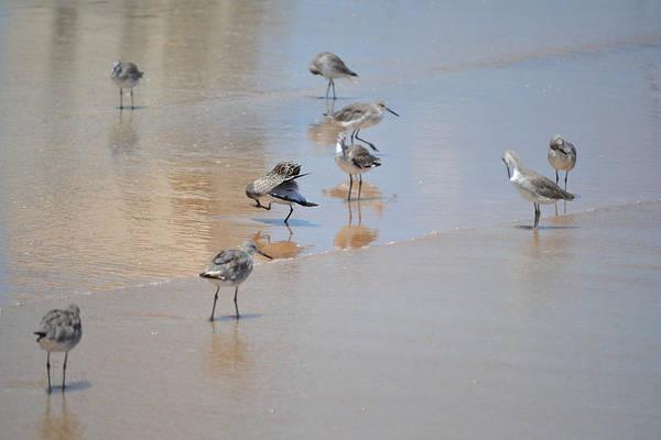 Flagler Photograph - Beach Birds - Flagler Beach Florida by rd Erickson