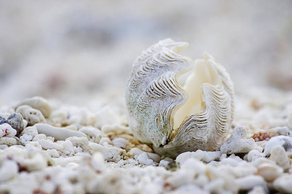 House Wall Art - Photograph - Beach Clam by Sean Davey