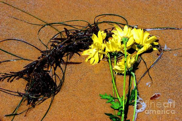 Photograph - Beach Flowers by Tap On Photo