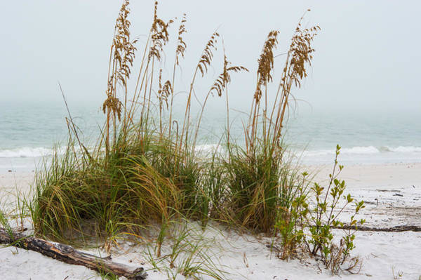 Photograph - Beach Fog II by Gene Norris