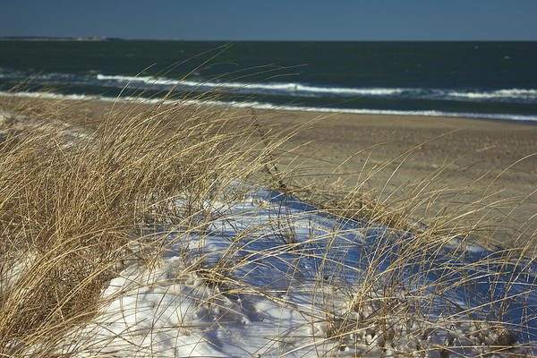 Photograph - Beach Grass by Amazing Jules