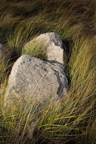 Photograph - Beach Grass And Rocks Near Lake Michigan by Randall Nyhof