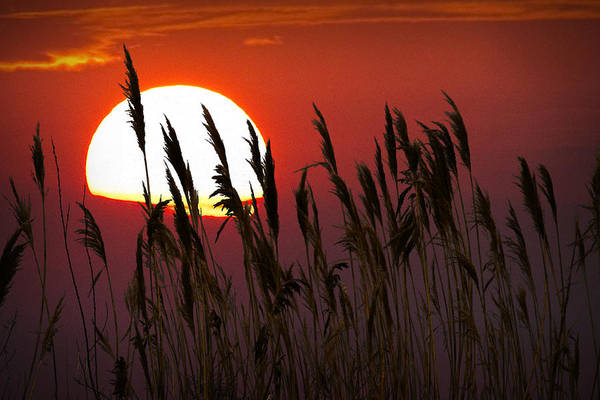 Photograph - Beach Grass At Sunset by Randall Nyhof