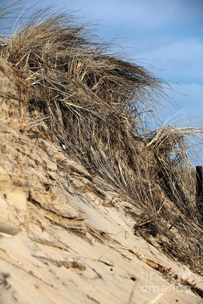 Down The Shore Photograph - Beach Grass by John Rizzuto
