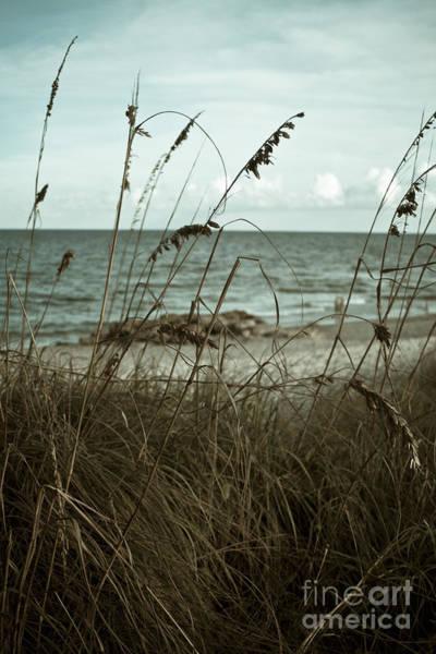Photograph - Beach Grass Oats by Janis Lee Colon