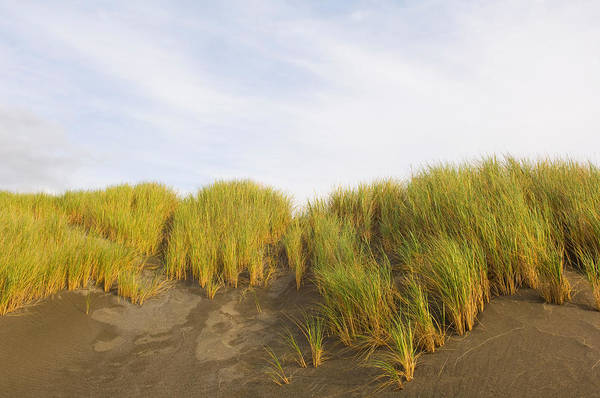 Oregon Dunes Photograph - Beach Grass On Sand, Pistol River State by Panoramic Images