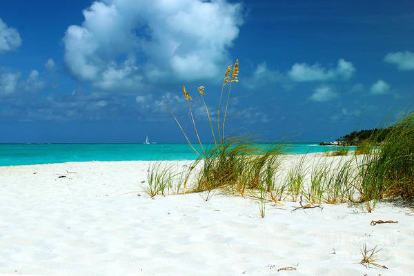 Photograph - Beach Grass by Robyn Saunders