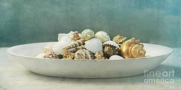 Mussel Wall Art - Photograph - Beach In A Bowl by Priska Wettstein