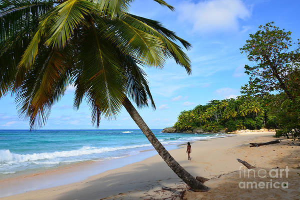 Photograph - Beach In Dominican Republic by Jola Martysz