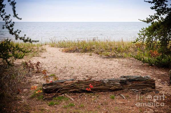 - Beach Path by Les Palenik