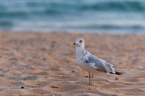 Photograph - Beach Patrol by Sebastian Musial