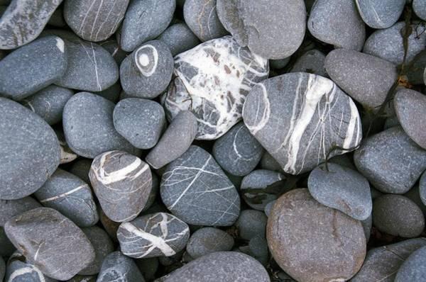 Quartz Photograph - Beach Pebbles With Quatz Veins. by Sinclair Stammers