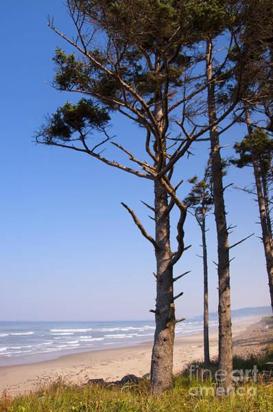 Photograph - Beach Pines by Brenda Kean