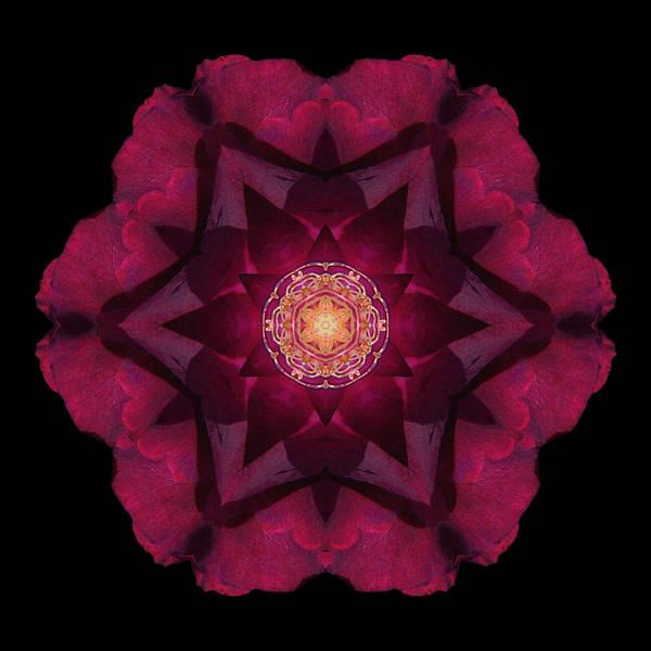 Photograph - Beach Rose I Flower Mandala by David J Bookbinder