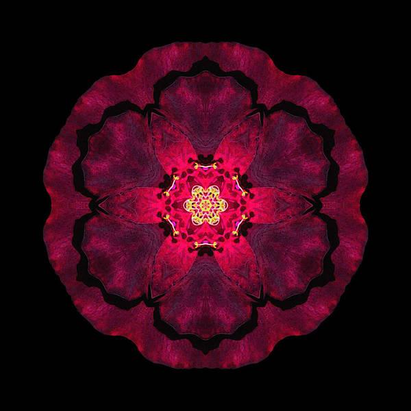 Photograph - Beach Rose II Flower Mandala by David J Bookbinder