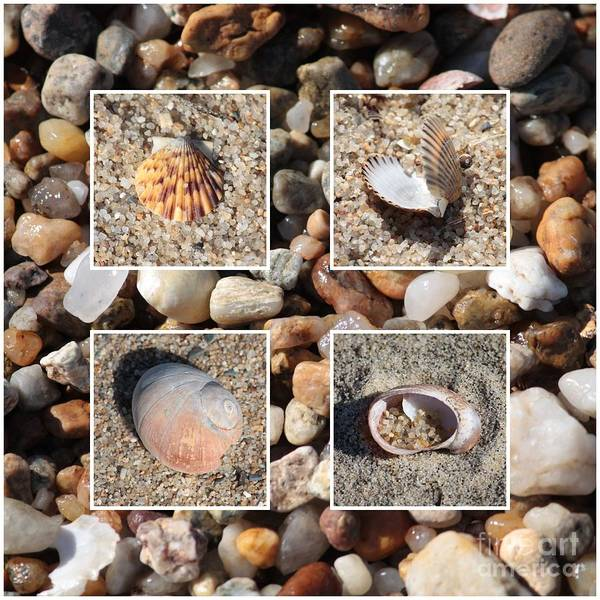 Photograph - Beach Shells And Rocks Collage by Carol Groenen