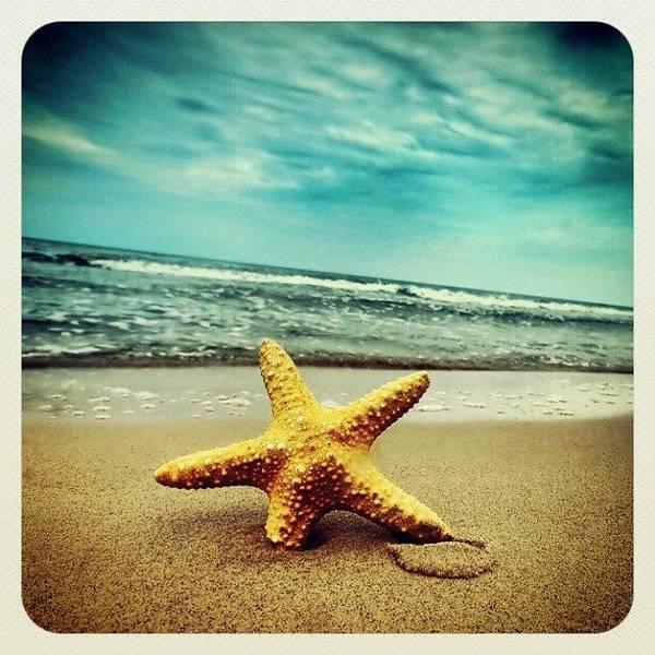 Brush Wall Art - Photograph - #beach #starfish by Samantha Brush