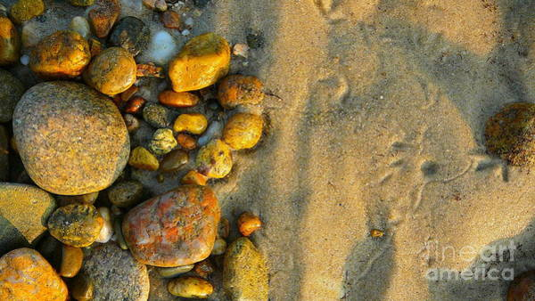 Squid Row Photograph - Beach Stones At Sunset Lambert's Cove by Matt Dana