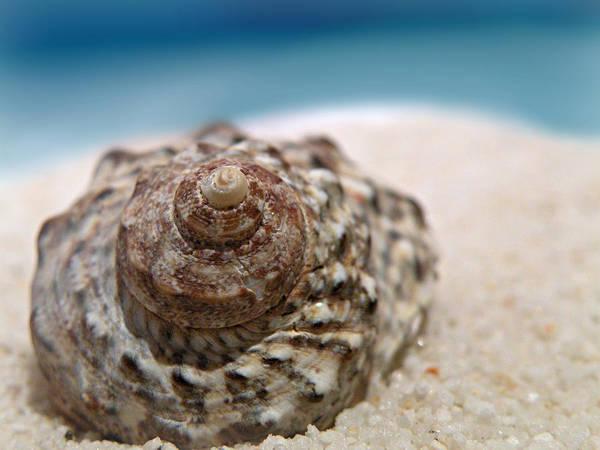Photograph - Beach Treasure by Micki Findlay