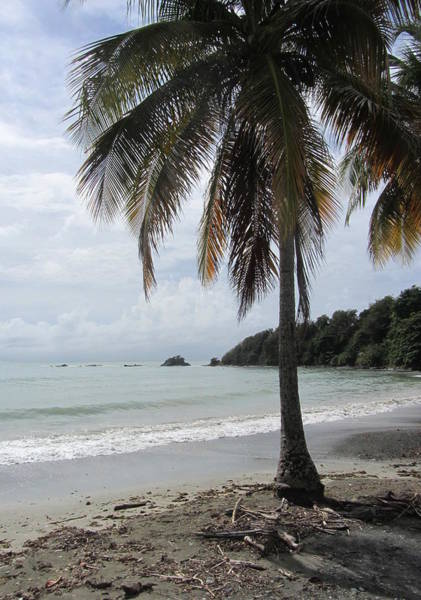 Photograph - Beach With Palm Tree by Anita Burgermeister