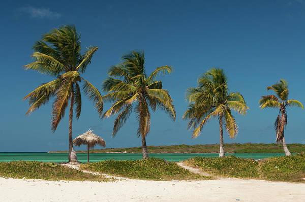 Palapa Wall Art - Photograph - Beach With Palm Trees by John Elk Iii
