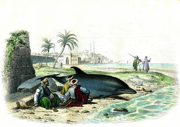 Wall Art - Photograph - Beached Dolphin by Collection Abecasis/science Photo Library