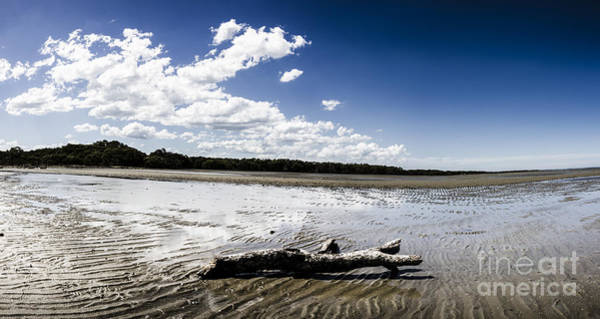 Qld Photograph - Beached Driftwood by Jorgo Photography - Wall Art Gallery