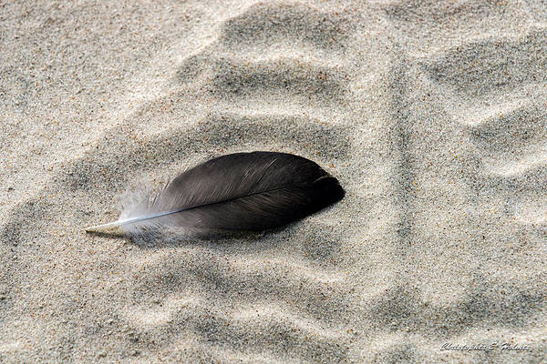 Photograph - Beached Feather by Christopher Holmes