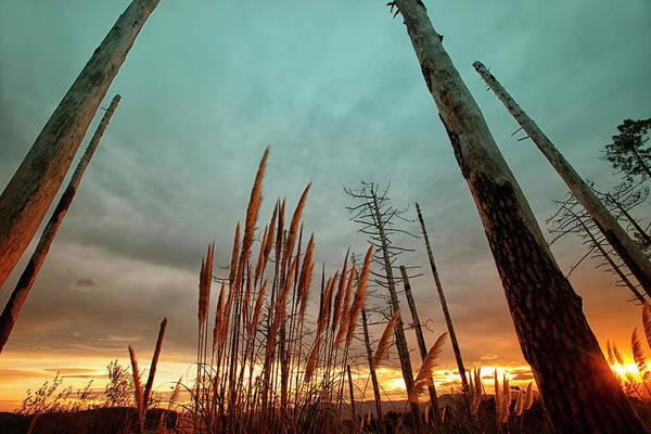 Wall Art - Photograph - Beachside Vegetation Barrika by David Santiago Garcia